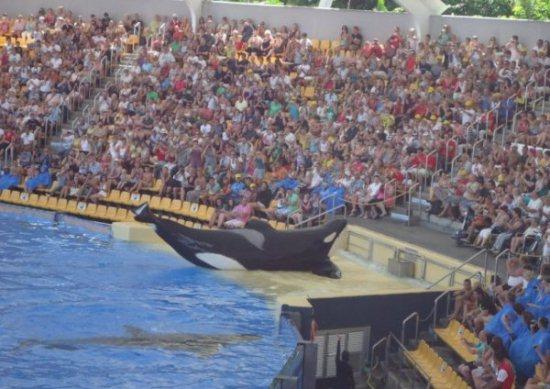 "SEE the TRAILER for Killer Whale Documentary ""BLACKFISH"""