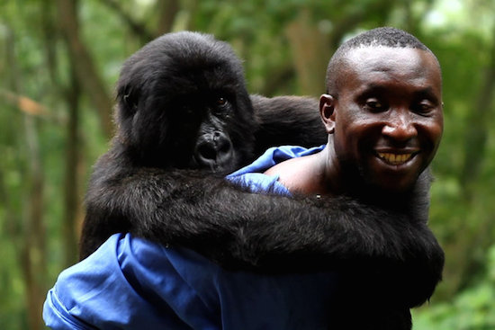 """""""VIRUNGA"""" """"THE IRON MINISTRY"""" Among Camden International Film Festival and Points North 2014 winners"""