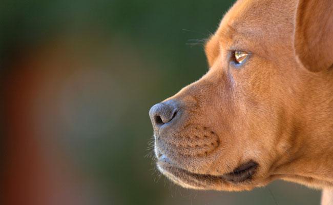 New Animals Rights Film Program at 2015 Hamptons International Film Festival, Includes World Premiere of Michael Vick Doc THE CHAMPIONS