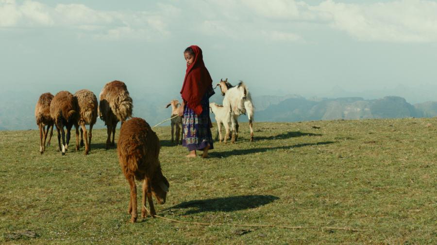Lamb, Yared Zeleke