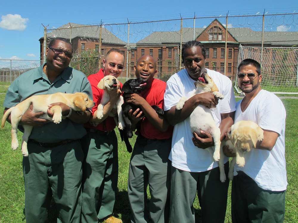 """""""Prison Dogs"""" 