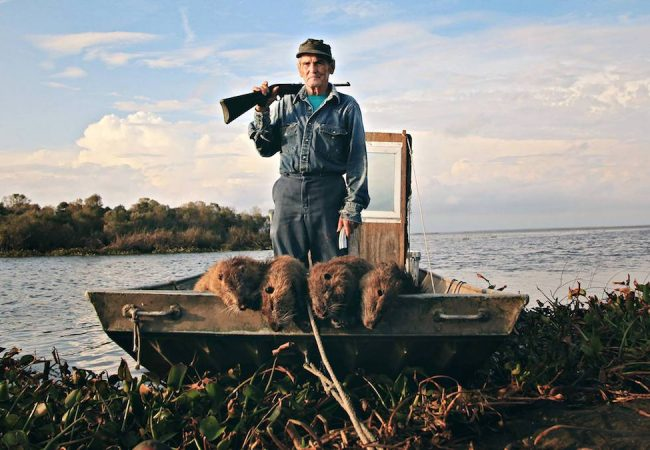 20 Pound Nutrias Invade Louisiana in Documentary RODENTS OF UNUSUAL SIZE | Trailer