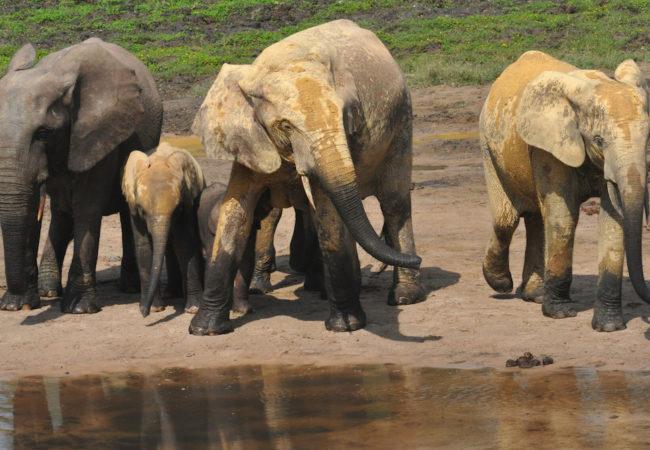 Elephant Path: Njaia Njoku