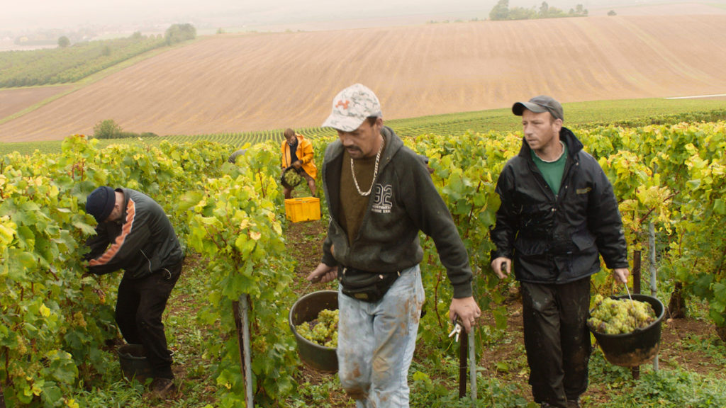 Film subjects picking grapes in Vas-y Coupe!, directed by Laura Naylor. Courtesy of By and By Productions