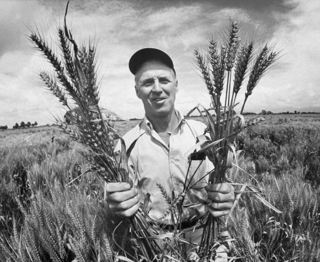 "Norman Borlaug - ""The Man Who Tried to Feed the World"""