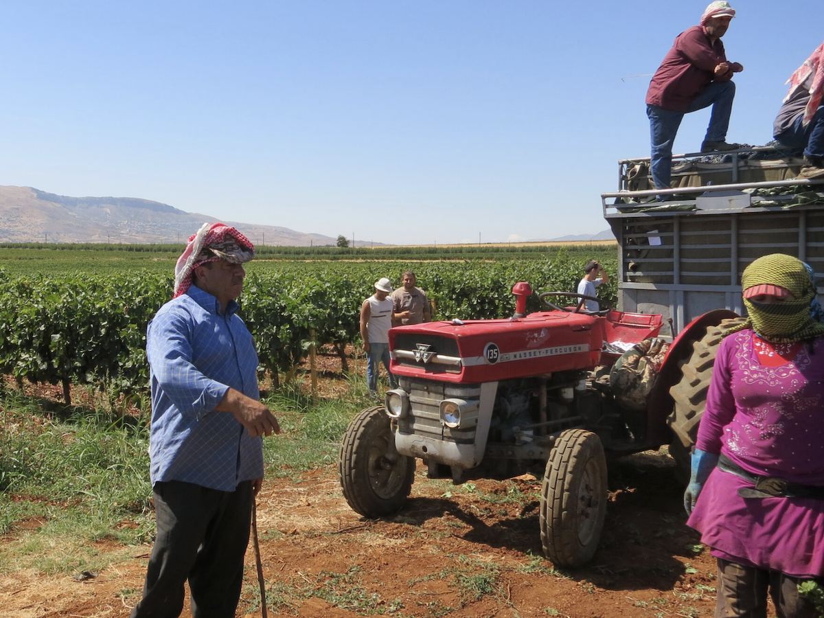 WINE and WAR: The Untold Story of Wine in the Middle East