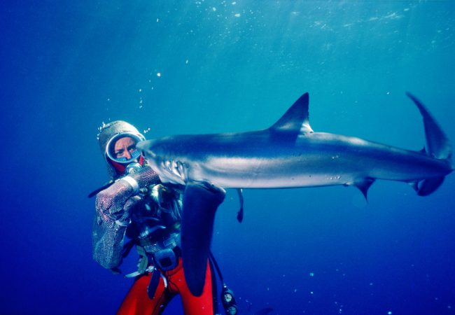 Playing with Sharks by Sally Aitken