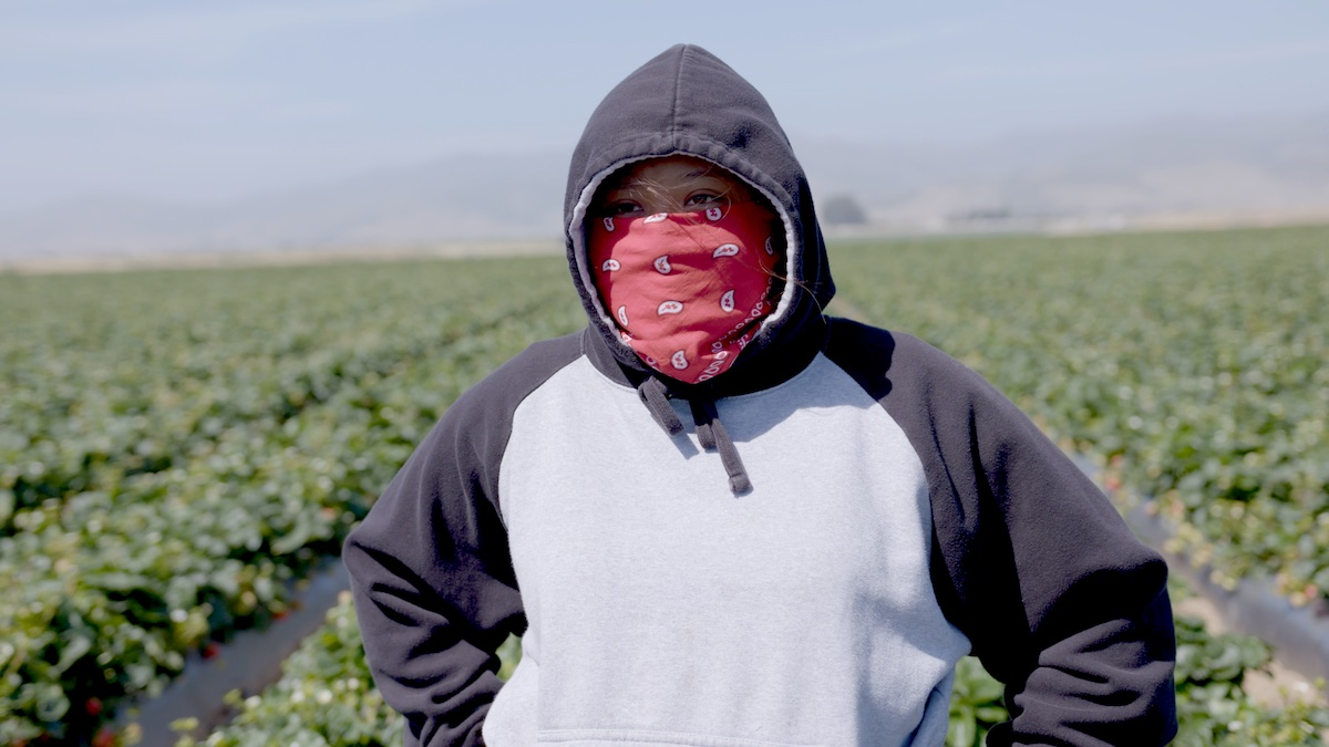 Ashley in the strawberry fields in FRUITS OF LABOR